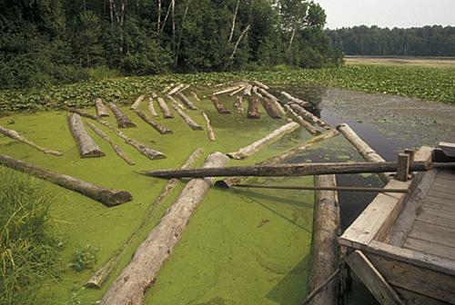 floating debris logs